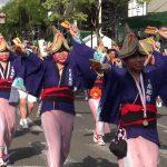 高知市役所踊り子隊